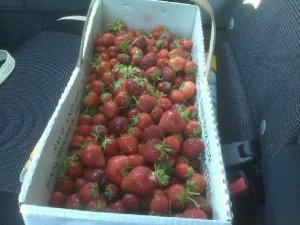 Our strawberry haul!
